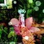 Garden + PicBlender